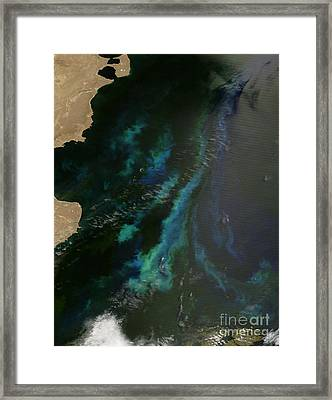 Phytoplankton Off Argentinas Coast Framed Print by Nasa