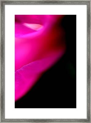 Pianese Macro Framed Print by Frank DiGiovanni