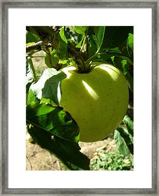 Pick Me Framed Print by Robert Barwegen