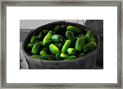 Pickling Cucumbers Framed Print by Ms Judi