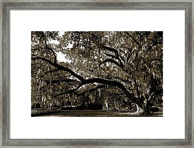 Framed Print featuring the photograph Picnic Under The Oak by DigiArt Diaries by Vicky B Fuller