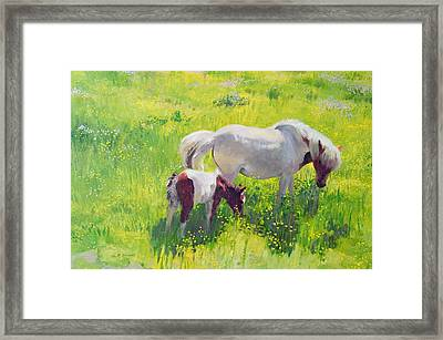 Piebald Horse And Foal Framed Print