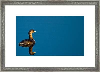 Pied-billed Grebe Contemplating Its Future Framed Print