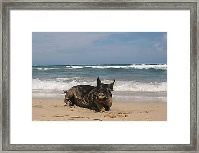 Pig In Paradise Framed Print