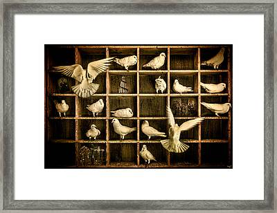 Pigeon Holed Framed Print by Chris Lord