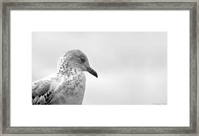 Pigeon Pride Framed Print by Nicola Nobile