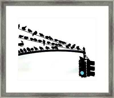 Pigeons Are Go! Framed Print