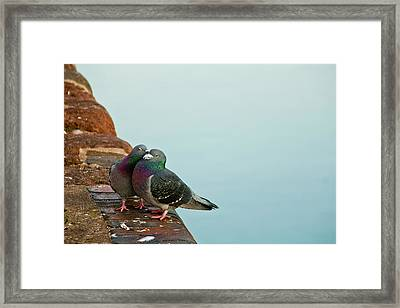 Pigeons In Love Framed Print by Image by J. Parsons