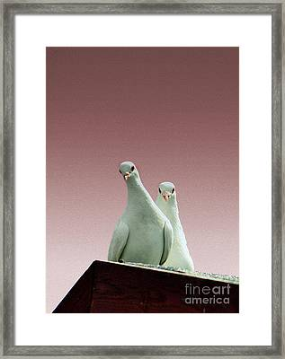 Pigeons In The Pink Framed Print by Linsey Williams