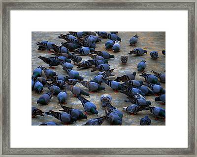 Pigeons Framed Print by Johnson Moya
