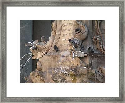 Pigeons Playtime Framed Print by Valia Bradshaw