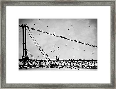 Pigeons Sitting On Building Crane And Flying Framed Print by Image by Ivo Berg (Crazy-Ivory)
