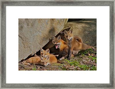Pile Of Pups Framed Print