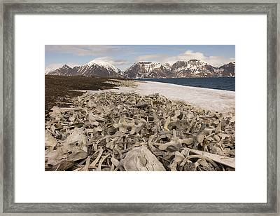 Piles Of Animal Bones Line The Icy Framed Print