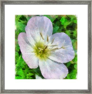 Framed Print featuring the painting Pimrose Beauty by Elizabeth Coats