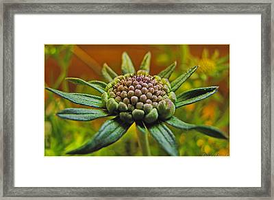 Framed Print featuring the photograph Pinchshin Bud by Debbie Portwood