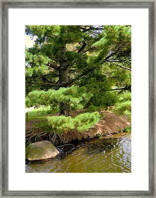 Pine Along The Water Framed Print by Mindy Newman