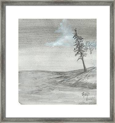 Pine And Birch Framed Print by Robert Meszaros