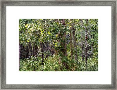 Pine Barrens Framed Print