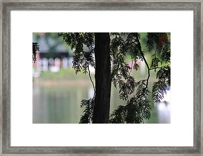 Pine Branch Over The River Framed Print by Janet Mcconnell
