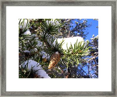 Pine Cone In Winter Framed Print