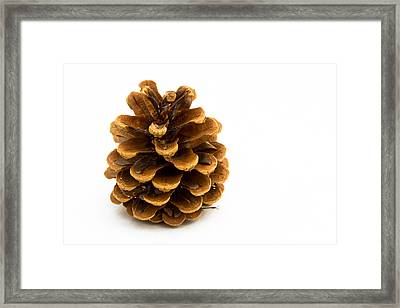 Pine Cone Framed Print by Jean Noren