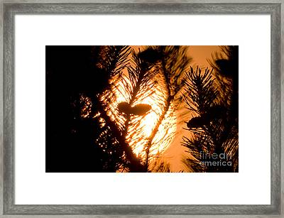 Pine Cone Silohuette Framed Print by Terry Elniski