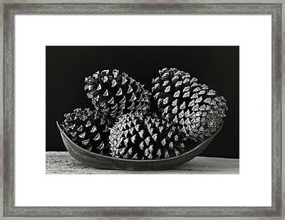 Framed Print featuring the photograph Pine Cones- St Lucia by Chester Williams