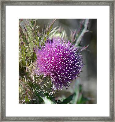 Framed Print featuring the photograph Pine Flower by Jeanne Andrews