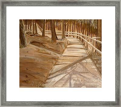 Pine Forest Walk Framed Print