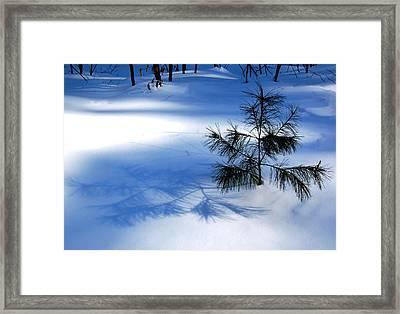 Pine Shadow Framed Print