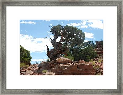 Framed Print featuring the photograph Pine Tree By The Canyon by Dany Lison