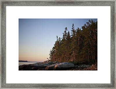 Pine Trees Along The Rocky Coastline Framed Print by Hannele Lahti
