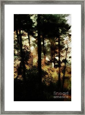 Pine Trees Framed Print by Dariusz Gudowicz