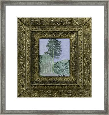 Pine Trees Framed Print by Glenn Olson