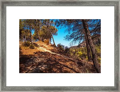 Pine Trees In El Chorro. Spain Framed Print by Jenny Rainbow
