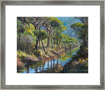 Pine Wood Reflections Framed Print by Marco Busoni