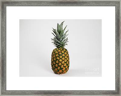 Pineapple Framed Print by Photo Researchers, Inc.