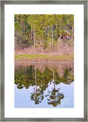 Pinetreeflection Framed Print