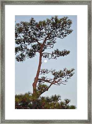Piney Moon Framed Print by Bill Cannon