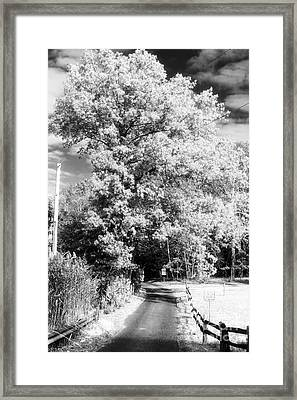 Piney Road Framed Print by John Rizzuto