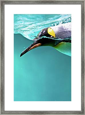 Pinguin Framed Print by Www.photo-chick.com