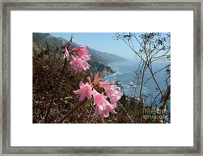 Pink Amaryllis Framed Print