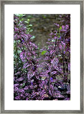 Pink And Green Leaves Framed Print by Eva Thomas