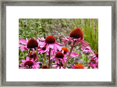 Pink And Orange Flowers Framed Print by Jo