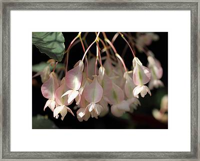 Pink And Pretty Framed Print by Mary Haber