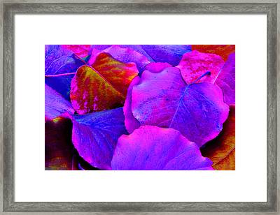Pink And Purple Leaves Framed Print by Sheila Kay McIntyre
