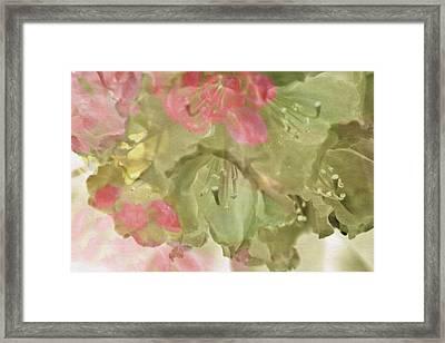 Pink And Sage Rhodie Framed Print by Bonnie Bruno