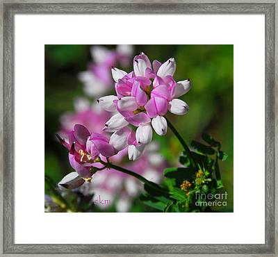 Framed Print featuring the photograph Pink And White by Cindy Manero