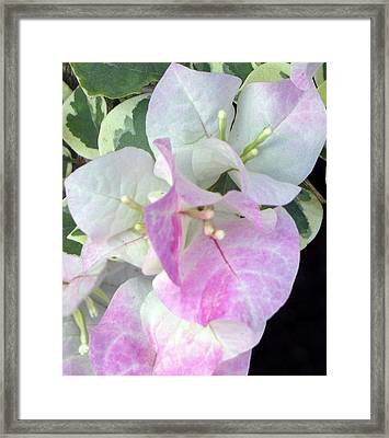 Pink And White Surprise Framed Print